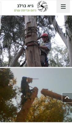 גיא ברלב גיזום עצים